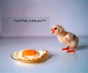 funny, egg, and Chicken image
