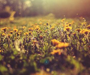 dandelion, summer, and warm image