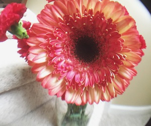bouquet, daisies, and red image