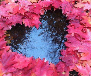 heart, love, and leaves image