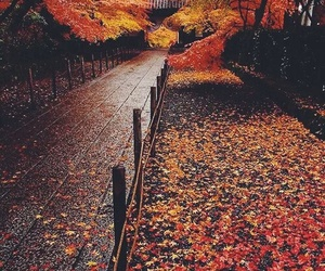 autumn, fall, and instagram image