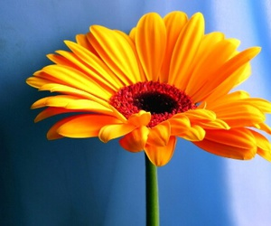 flower, orange, and small image