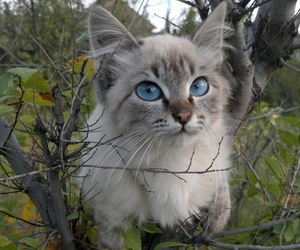 animal, blue, and cat image