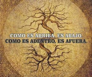 nature, tree, and yin yang image