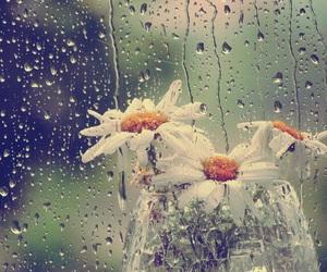 flowers and rain image