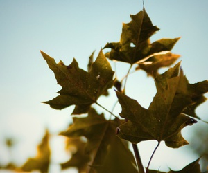 autumn sun cold image