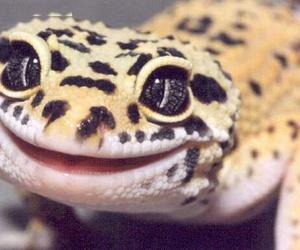 animal, funny, and lizard image