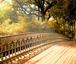 bridge, beautiful, and autumn image