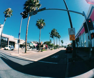 palm trees, travel, and usa image