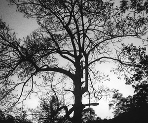 tree, aesthetic, and black and white image