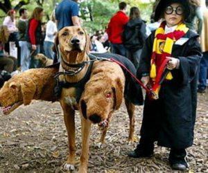 kids halloween costumes, adult halloween costumes, and couple halloween costumes image