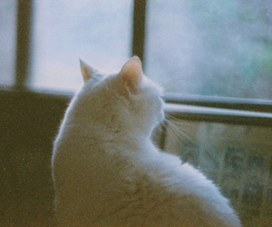 cat, indie, and vintage image