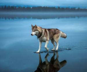 walk, water, and wolf image