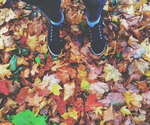 autumn, colorful, and comfy image