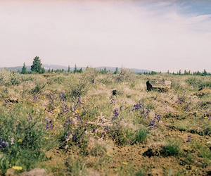 35mm, spring, and high desert image