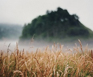 nature, field, and fog image