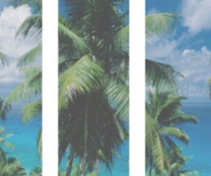 pale, header, and palms image