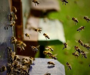 bees, work, and honey image