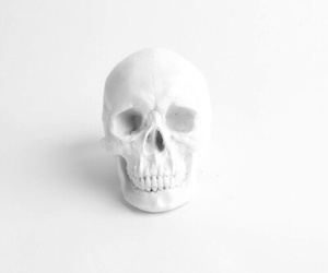 skull, white, and grunge image