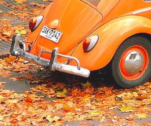 orange, autumn, and car image