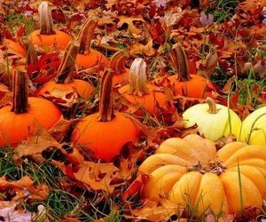 autumn, gourds, and fall image