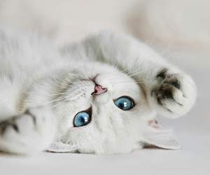 cute, white, and cat image