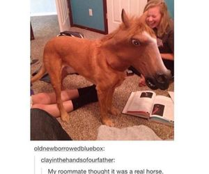 funny, horse, and dog image