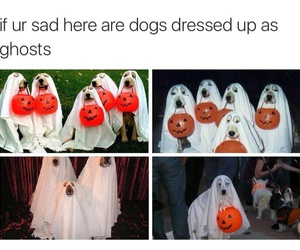adorable, costumes, and dogs image