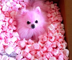 cute, pink, and dog image