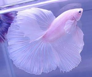 fish, pink, and animal image