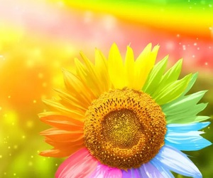 colorful and flower image