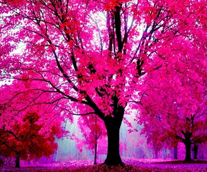 forest, happy, and pink image