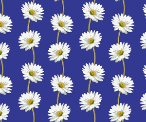 background, daisy, and pattern image
