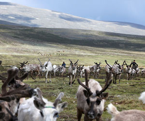 mongolia, nature, and nomads image
