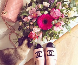 chanel, flowers, and cat image