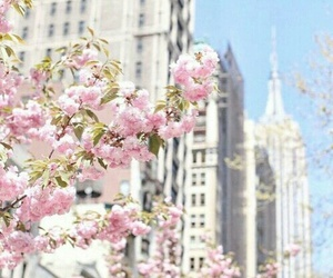flowers, pink, and city image