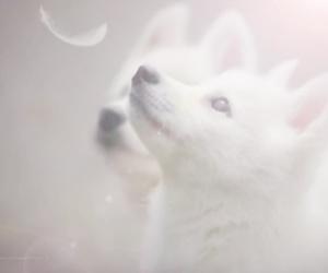 amazing, beautiful, and dog image