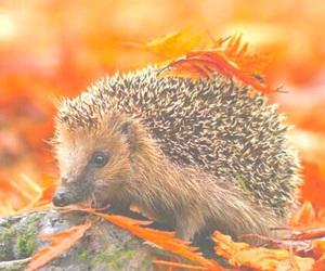 autumn, hedgehog, and fall image