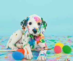 colors, dogs, and sweet image