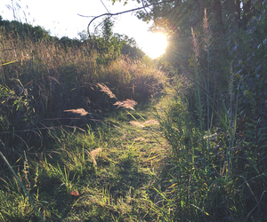 grass, nature, and sun image