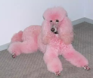 pink, aesthetic, and dog image