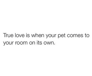 cat, quote, and love image