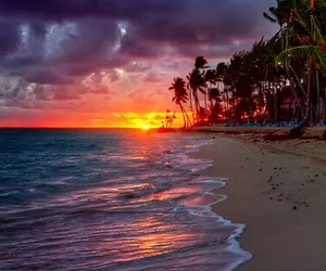 beach, Island, and palm trees image