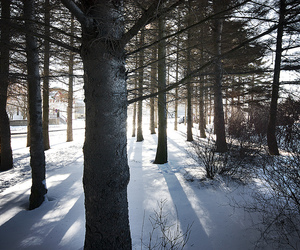trees, nature, and snow image