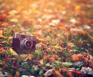 autumn, camera, and fall image