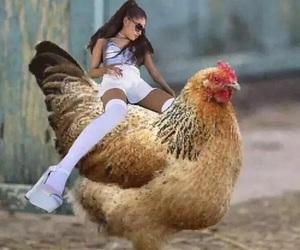 amazing, beautiful, and Chicken image