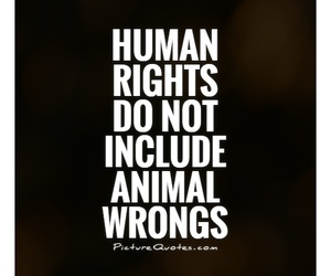 animals, cruelty, and equality image