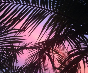 palm, pink, and sky image