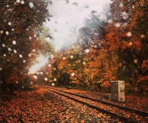 autumn, rain, and leaves image