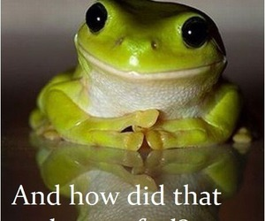 frog, funny, and lol image